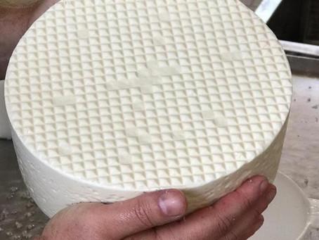 Experimentos da EPAMIG buscam aprimorar processo de produção de queijos Minas Artesanais