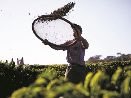 Bayer anuncia campanha PRO Carbono com benefícios para agricultores