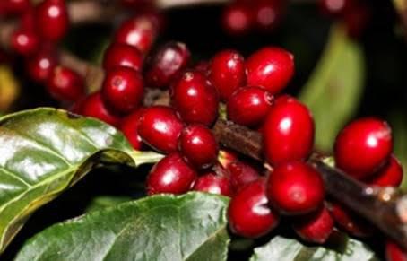 Conheça os produtores ganhadores do 4º Cupping de Cafés Especiais ATeG