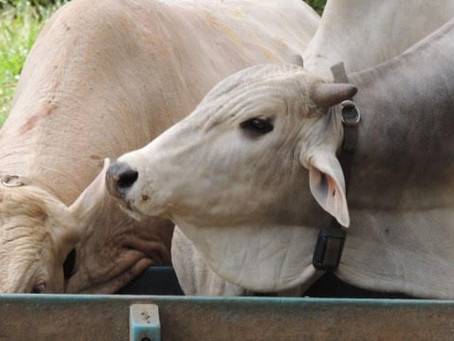 Inovações 4.0 ajudam no bem-estar animal, minimiza custos e perdas e maximiza ganhos