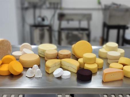 PR: Parque Tecnológico desenvolve projeto de incentivo para produção de queijos finos