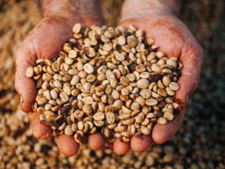 Cafeicultores e técnicos trocam experiências sobre secadores estáticos em visita de campo