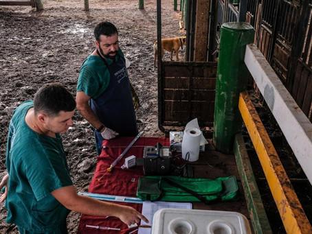 Governo de MT investe em melhoramento genético para fortalecer bacia leiteira