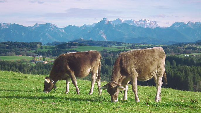 Schwarzenberg_Allgau.jpg