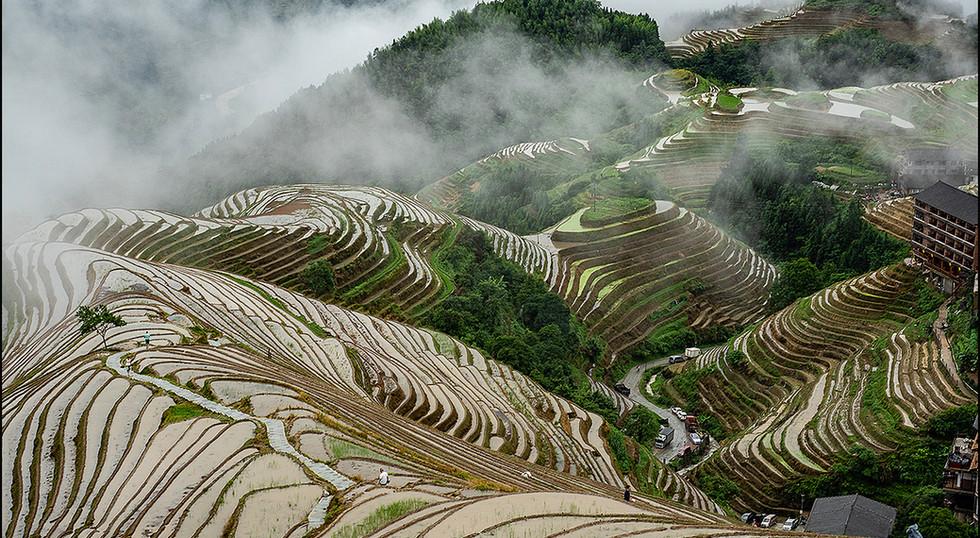 Rice Terrace by Les Thwaites