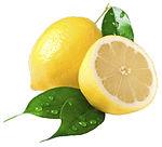 reife Zitronen mit Blätter