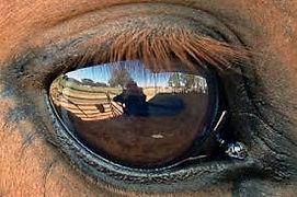 horse eye as mirror3.jpg