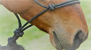 gentle horse head 2r.jpg