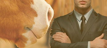 nose_and_face - equine connection.jpg