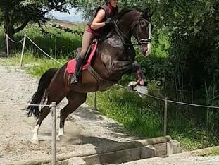 A cheval à la IENA - 9 juin 2018