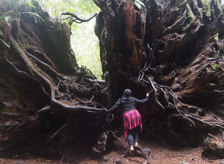 Redwoods National Park Photo Diary