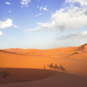 Photo Diary: The Sahara