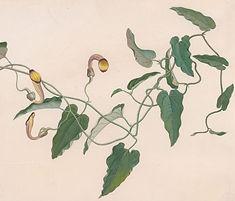 Flower 53.jpg