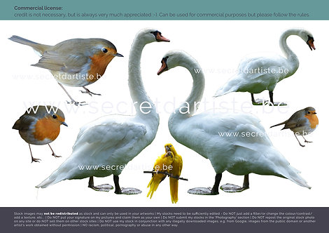 Instant download - PNG swans and robins