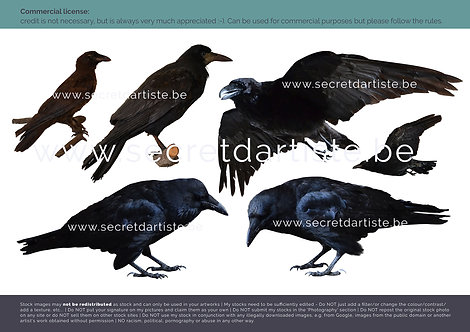 Instant download - PNG birds crows and raven