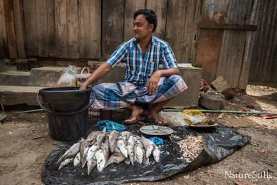 Spadenose Shark Market.jpg