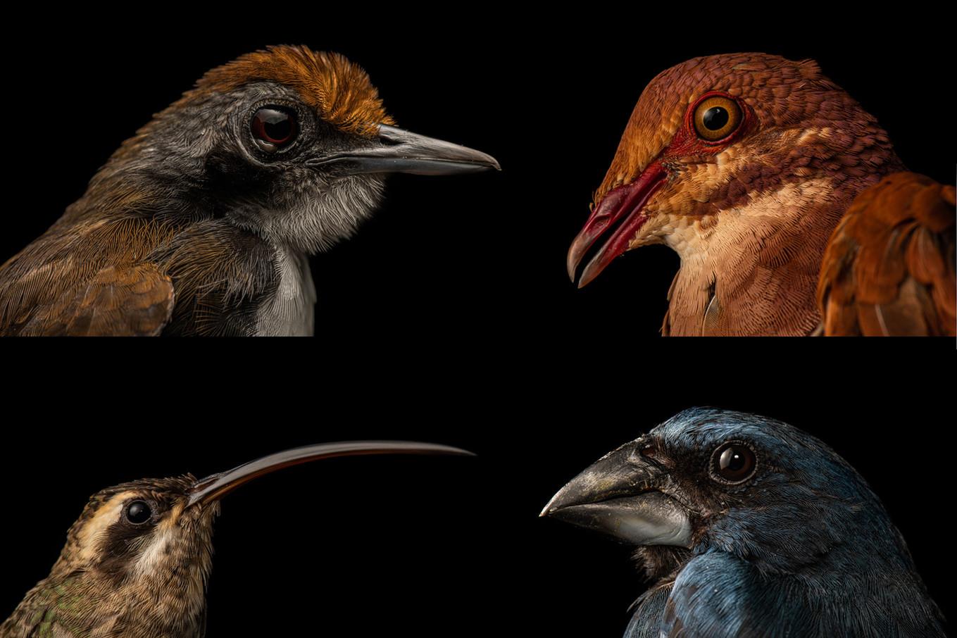 TMA Bird Portraits.jpg
