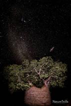 Baobab Sky
