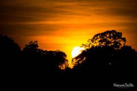 Canopy Sunset