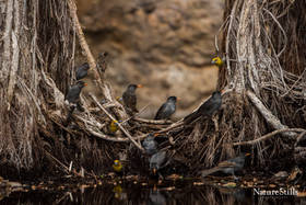 Madagascar Birds
