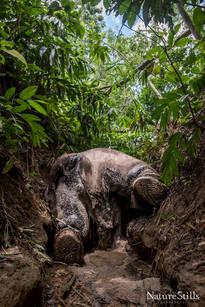 Conflict Elephant