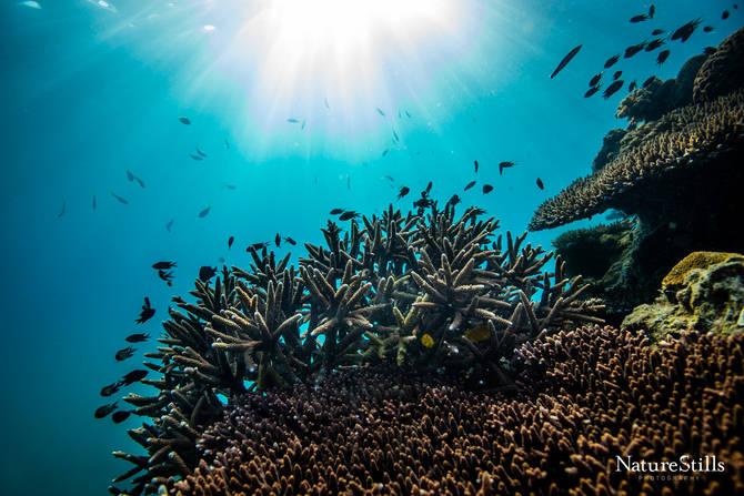 Vietnamese Reef