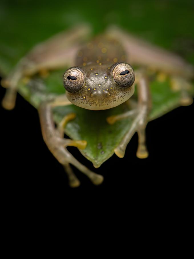 New species of frog