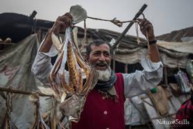 Bangladeshi Fishmonger.jpg