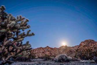 Mojave Moonrise