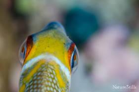 Colorful Fish Macro