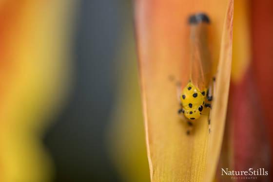 Leaf Hopper Bug Camouflage