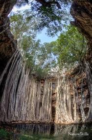 Fig Tree Cave