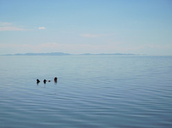A swim in the Great Salt Lake, Utah