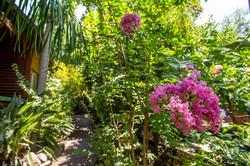 פרחי החצר