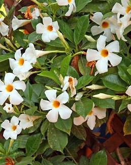 פרחי גינה.jpg