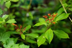 פרחים בחצר 3