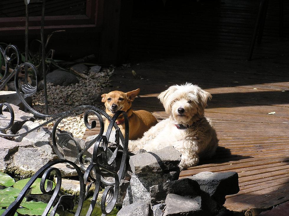 ג'ויה ושניצל מחכות לאורחי הצימרים.jpg