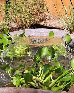 צמחי המים.jpg