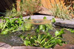 צמחי המים