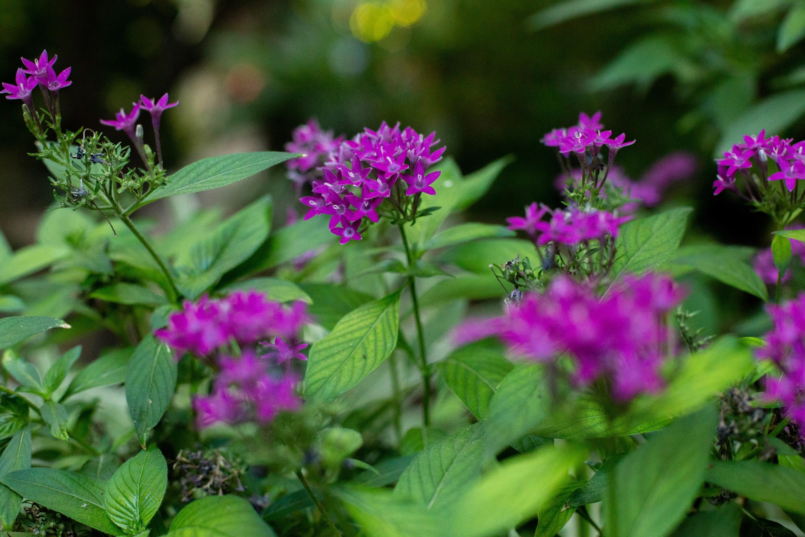 פרחים בחצר 2