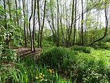 Alder carr - Greenwich Ecology Park.jpg