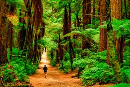 Rotorua - Redwoods Forest