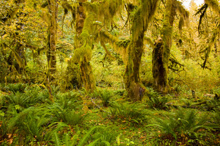 Hoh Rain Forest - Washington