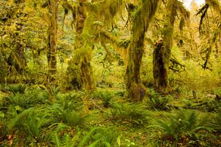 Hoh Rain Forest - Washington