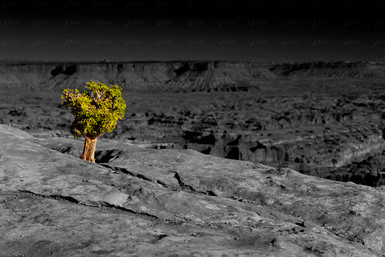 Canyon Land Nationalpark - Utah