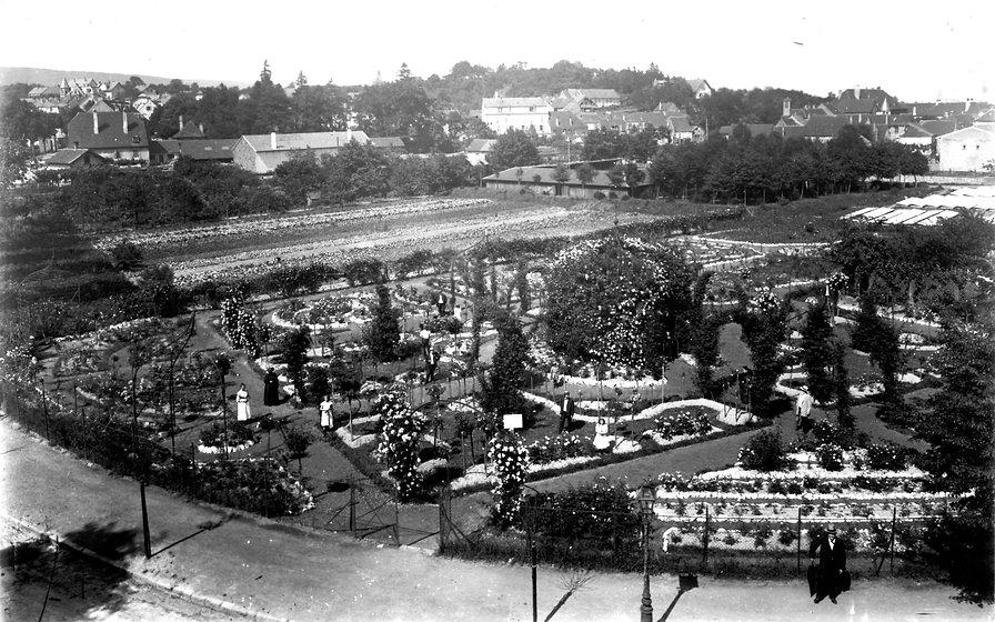 ROSERAIE 1911.jpg