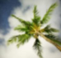 Hawaiian Nights_edited.jpg