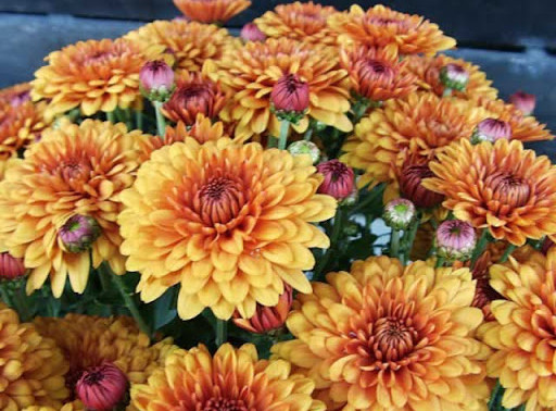 5 Fall Flowers For Your Home!