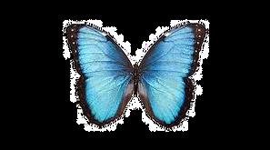 papallona_edited.png