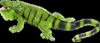 iguana_edited.png